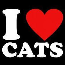 Bugis_Cat