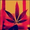 Deimis_Weed